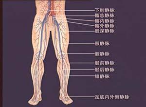 下肢静脉解剖和生理