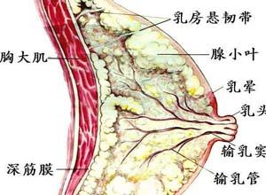 乳房胀痛,乳房胀痛的原因,乳房胀痛怎么办-妇科